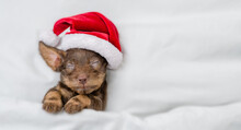 Funny Dachshund Puppy Wearing Red Santa Hat Sleeps Under White Blanket At Home. Top Down View. Empty Space For Text
