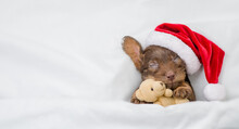 Funny Dachshund Puppy Wearing Red Santa Hat Sleeps Under White Blanket At Home And Hugs Favorite Toy Bear. Top Down View. Empty Space For Text