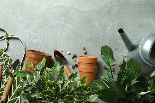 Fototapeta Concept of gardening on gray textured background
