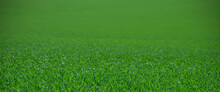Fresh Green Grass Growing On Field Isolated