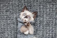 Kitten On Gray Knitted Blanket
