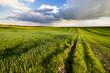 Wiejskie pola, świeża trawa