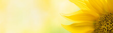 Nature Of Sun Flower In Garden Using As Cover Page Background Natural Flora Wallpaper Or Template Brochure Landing Page Design