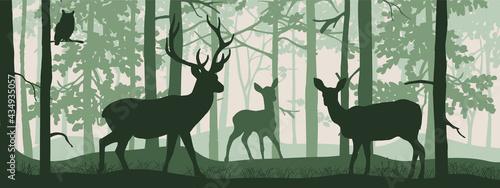 Fotografia, Obraz Horizontal banner of forest landscape