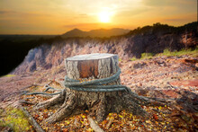 An Old Tree Stump On A Background Of Mountains. Concept Of Ecology, Tree Felling, Drought
