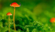 Mushromm