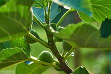 Close-up Pattern Green Leaf