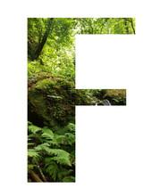 Letras Rellenas De Imagen De Selva Tropical, Muy Verde Con Cascada, Helechos Y Selva Cerrada.