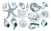Hand Drawn Vector Marine Collection. Scallop, Clam, Conch, Limpet, Oyster Shells, Starfish And Nautilus