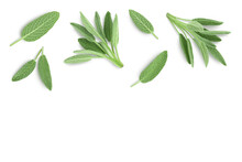 Fresh Sage Herb Isolated On White Background With Clipping Path And Full Depth Of Field, Top View With Copy Space For Your Text. Flat Lay