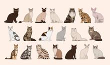Set Of Realistic Cats Vector Illustration Design