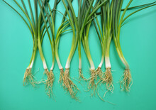 Composition Of Fresh Asian Green Onions Head On Green Background.