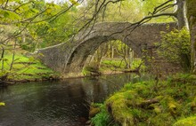 The River Swale In Springtime Flowing Beneath Ivelet Bridge Just As The Trees Are Bursting Into Leaf And The Remaining Daffodils On The Banking.  Gunnerside, UK.  Space For Copy.
