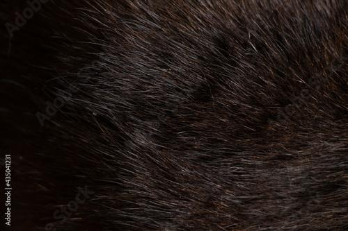 Fotografiet background of black cat fur close up, black cat, wool