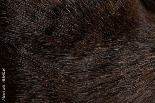 Canvastavla background of black cat fur close up, black cat, wool
