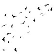 flying bird black silhouette, flock