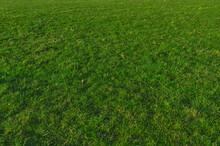 Grüne Wiese Für Hintergrund