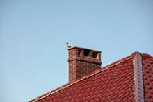 Pigeon On The New Chimney