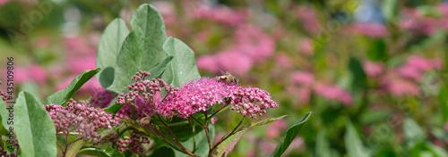 działka kwiat owad