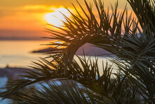 Palm Tree With Orange Sunset In The Background. Focus In The Front. Stock Image.