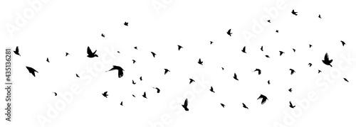 Vászonkép A flock of flying birds. Vector illustration