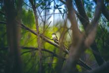 Natural Wild Bird Secret To Andes
