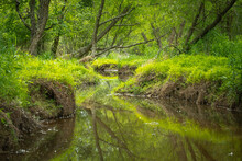 A Tranquil Landscape Of A Creek Lazily Meandering Throuh The Lush Spring Greenery In The Forest.