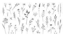 Wild Flowers. Hand Drawn Field Blooming Herbs With Leaves Or Stems. Black And White Doodle Blossom. Decorative Floral Elements Set. Botanical Herbarium Sketch. Vector Nature Background
