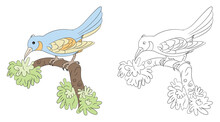 Coloring Page Kids Coloring Book  Animal Bird Education
