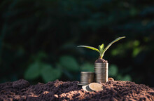 The Pile Of Coins Is Placed On The Soil And A Plant Grows On Top In Nature Background.