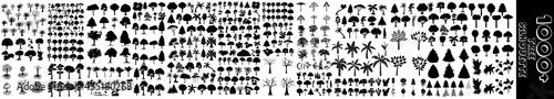 Foto Tree silhouette black vector