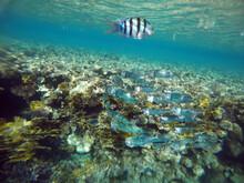 Stunning Undersea Coral Reef View, Red Sea, Egypt, Sharm El Sheikh