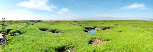 Fotografie, Obraz Gras am Nordsee Strand bei Ebbe - Nordseeküste in Deutschland