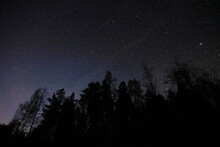 Black Silhouettes Of Coniferous Trees, Starry Sky, Shooting Stars.
