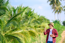 Young Farmer Or Owner Of A Coconut Plantation Work In A Coconut Plantation Using A Tablet, Check The Number Of Coconut Trees For Sale In Thailand.