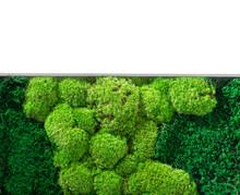 Green Wall Decoration Cladonia Rangiferina Reindeer Moss