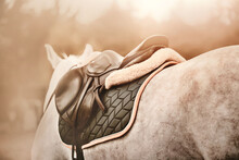 A Rear View Of A Dappled Grey Horse With A Leather Sports Saddle On Its Back And A Dark Padded Saddlecloth, Illuminated By Daylight. Equestrian Sports. Horse Riding. Equestrian Life.