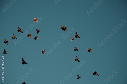 Obraz na płótnie bird