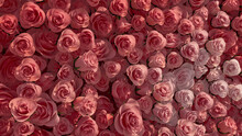 Colorful, Elegant Wall Background With Roses. Bright, Floral Wallpaper With Pink, Romantic Flowers. 3D Render