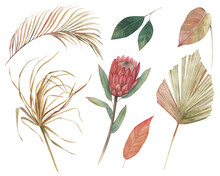 Watercolor Floral Exotic Set With Protea Flowers And Jungle Leaves. Hand Drawn Isolated On White Background
