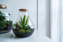 Small Decoration Plants In A Glass Bottle, Garden Terrarium Bottle,  Forest In A Jar. Terrarium Jar With Piece Of Forest With Self Ecosystem. Save The Earth Concept. Bonsai, Set Of Terrariums, Jars
