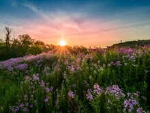 Landscape Scenery Of The Sun Rising Over A Hillside Illuminating A Field Of Purple Wildflowers, Dame's Rocket, Phlox With Colorful Sky Of Blue, Pink And Orange In Southwest Pennsylvania In Spring..