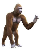 Gorilla On White Background