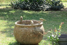 A Closeup Photograph Of A Variety Of Small Green, Yellow, Brown, Black And Grey Birds Sitting In And On The Edge Of A Large Cement Pot In The Garden On A Sunny Day In South Africa