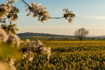 Polska wieś, piękny krajobraz