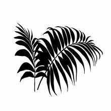 Single Black Leaf Of Isolated On White Background. Ideal For Printing Home Decor On Canvas.