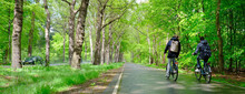 Boys On Bicycle Ride Home From School Through Spring Forest In Holland