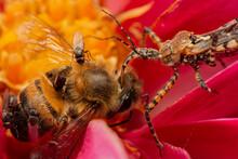 Bee Being Eaten