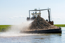 Oyster Shells Being Put Back Into The Water
