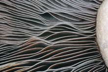Closeup Of Mushroom Gills